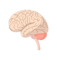 Human brain cartoon icon vector image