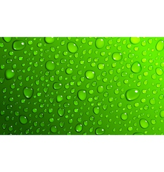 Green background water drops vector