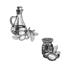 hand drawn sketch of argan oil extract of plant vector image