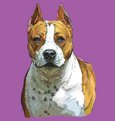 Colorful american staffordshire terrier hand vector