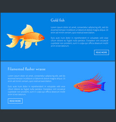 Gold fish and flasher posters vector