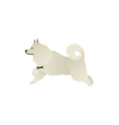 Happy smiling white fluffy dog running isolated on vector