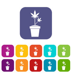 hemp in pot icons set vector image