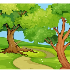National park scene with big trees vector