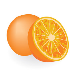 oranges isolated on a white background vector image