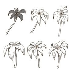 Palm tree set colorless vector