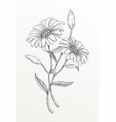Two hand drawn daisies vector