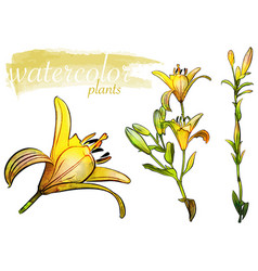 yellow watercolor flower set vector image