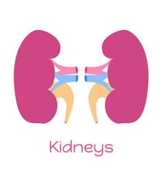 kidneys in flat style viscera icon internal organ vector image