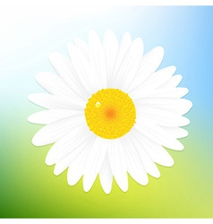 Camomile And Sky vector image