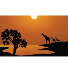 Giraffe family silhouettes in Africa vector image