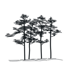 Hand drawing sketch tree groupe of pines vector