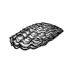 oyster shell ink sketch vector image