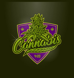 medical cannabis badge vector image