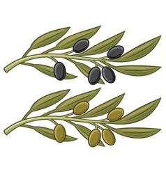 olive branch olive leaf vector image
