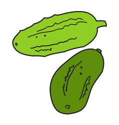 two green cucumbers vector image