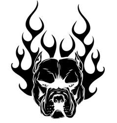 Bulldog flames on white background vector