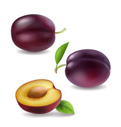 Realistic plum collection plums 3d vector