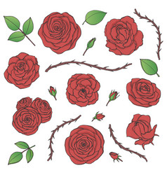 set of red rose flowers with buds leaves vector image