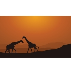 Silhouette Giraffe On Sunset Background vector