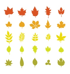 Set of colorful autumn leaves leaf collection vector