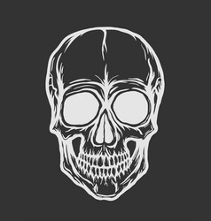 skull isolated on black background vector image