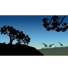 Silhouette of tree and giraffe vector image