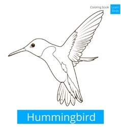 Hummingbird learn birds coloring book vector image