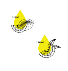 Lemon peel oil icon set hand drawn sketch vector