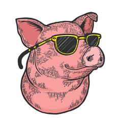 Pig in sunglasses color sketch engraving vector