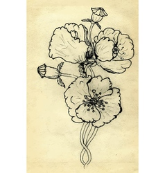 Poppy Flowers Sketch vector image