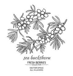 Sea buckthorn set vector