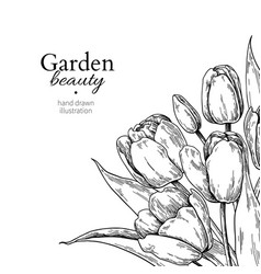 Tulip flower and leaves drawing border vector
