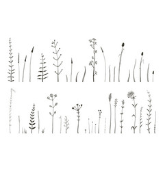 wild grass and herbs monochrome botanical vector image