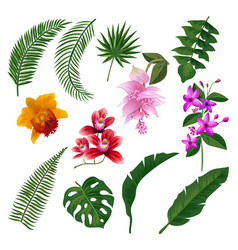 set of tropical flowers bouquet vector image vector image