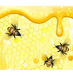 Bees on Honeycomb Cartoon vector