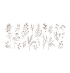 collection different medical herbs treatment vector image