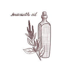 Drawing amaranth oil vector