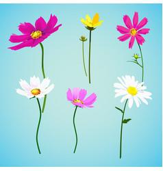 Set of wild summer flowers vector
