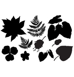 tropical leaves collection set plant elements vector image