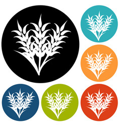 ears of wheat barley or rye visual graphic icons vector image