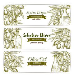 olive oil sketch banner set with fruit and bottle vector image vector image