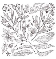 Tropical Plants Set vector image