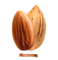 almond nuts in shell and shelled 3d realistic vector image