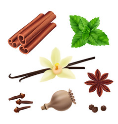 herbs and spices cinnamon vegan leaves fresh vector image