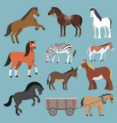 Horse animal of horse-breeding or vector