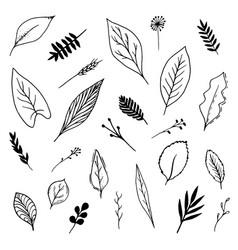 isolated hand drawn leaves set vector image