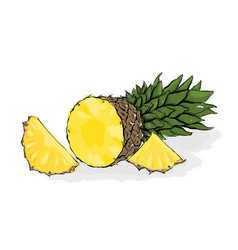 Large exotic pineapple still-life from fruit hand vector