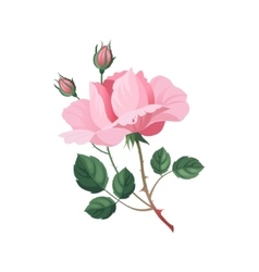 Rose Hand Drawn Realistic vector image
