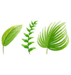 Three types of green leaves vector